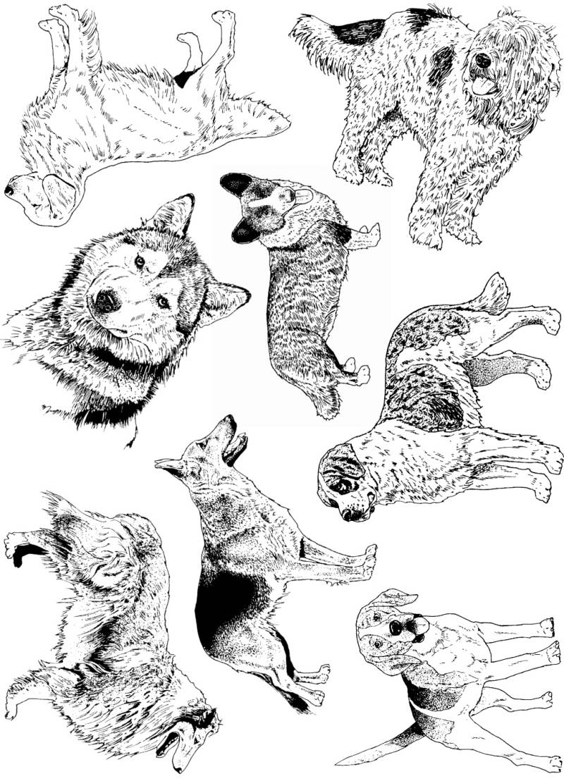 PLATESW162 Plate 162 Dogs