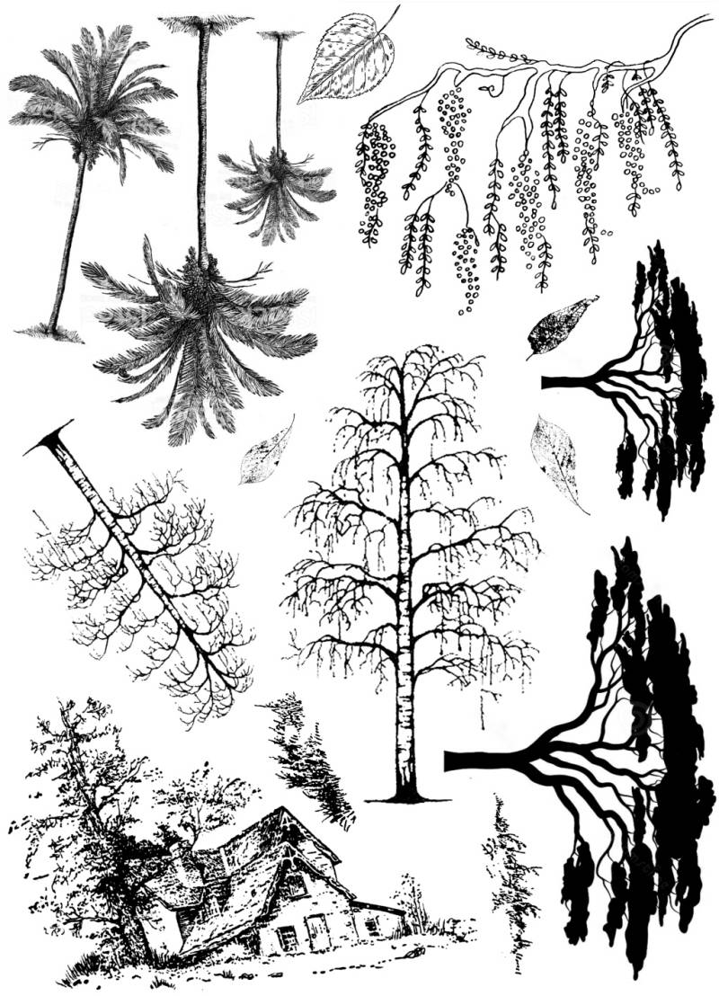 PLATESW226 Plate 226 Trees