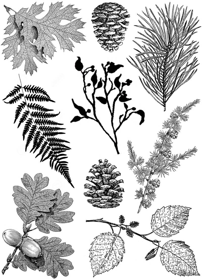 PLATESW227 Plate 227 Leaves