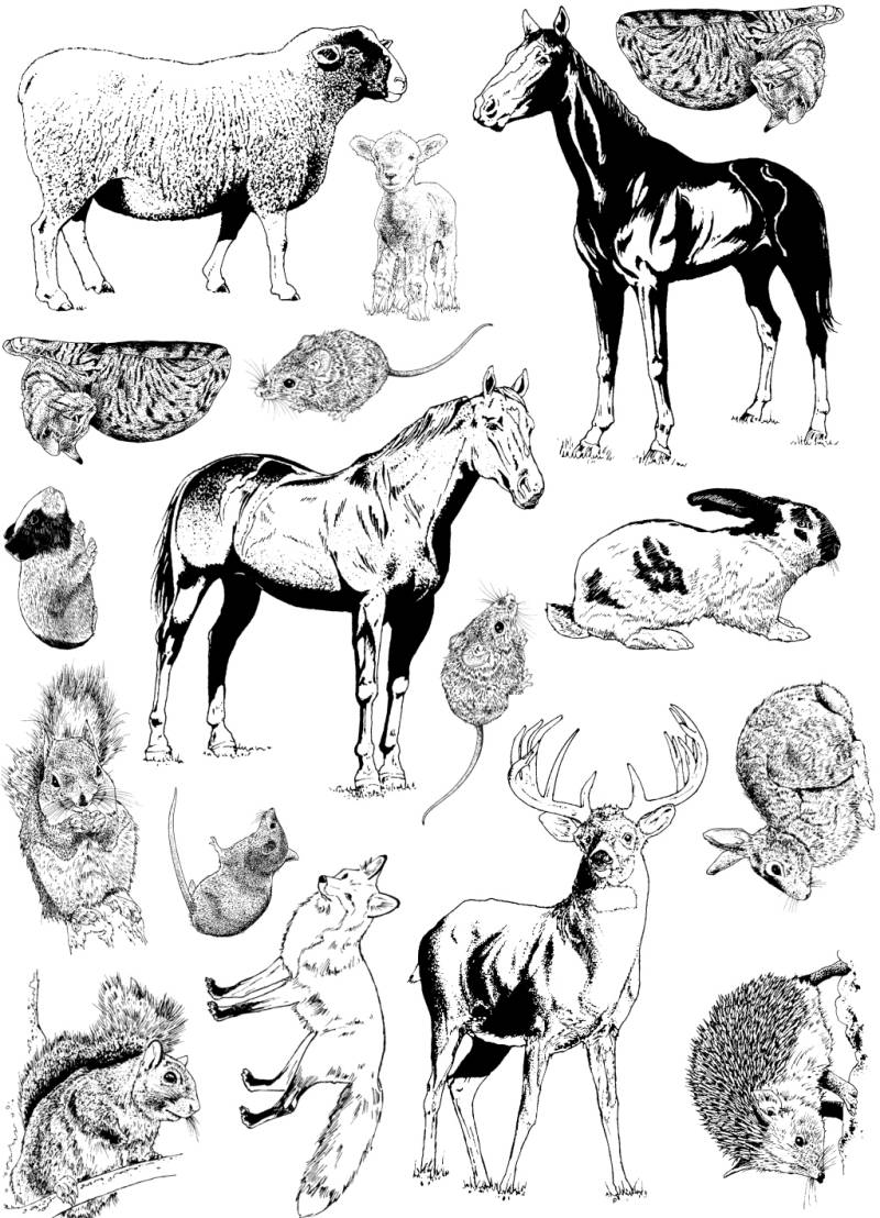 PLATESW030 Plate 030 Dutch animals