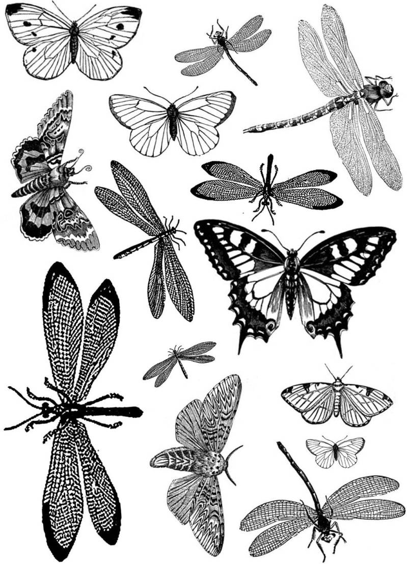 PLATESW008 Plate 008 Butterflies and dragonflies