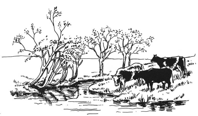 SW Q14035/175 Cows in meadow
