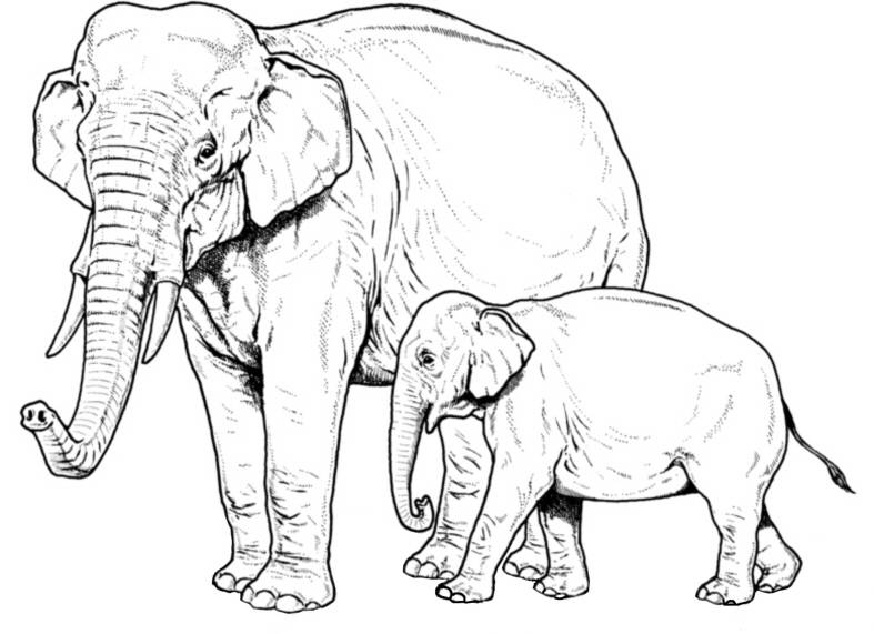 SW R17062/202 Elephant with young