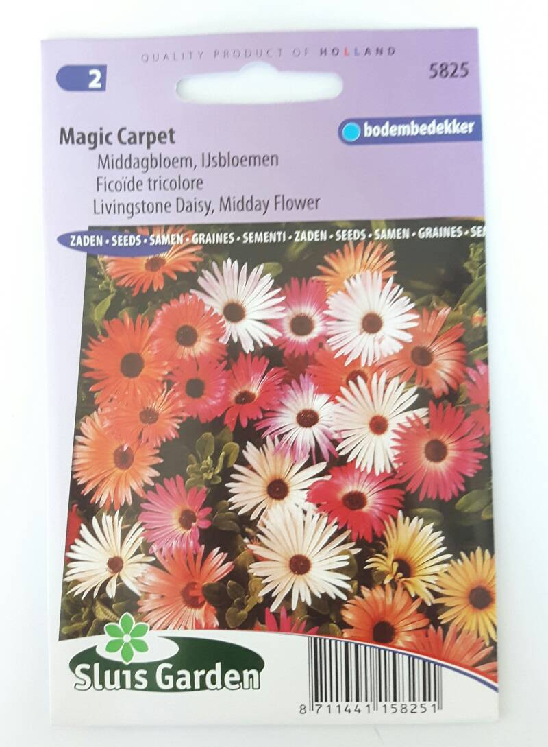 IJsbloem Magic Carpet mix (Middagbloem)