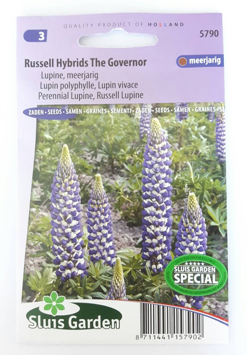 Lupine Russel Hybrids The Governer