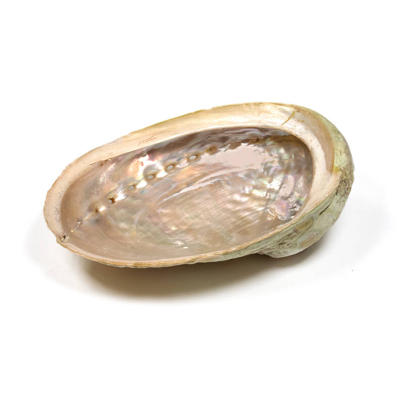 Abalone smudge schelp Large
