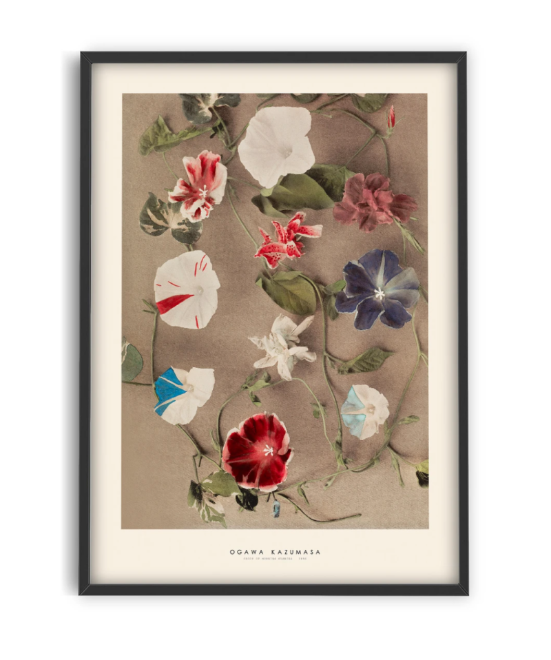 Print | Japandi - Group of morning glories