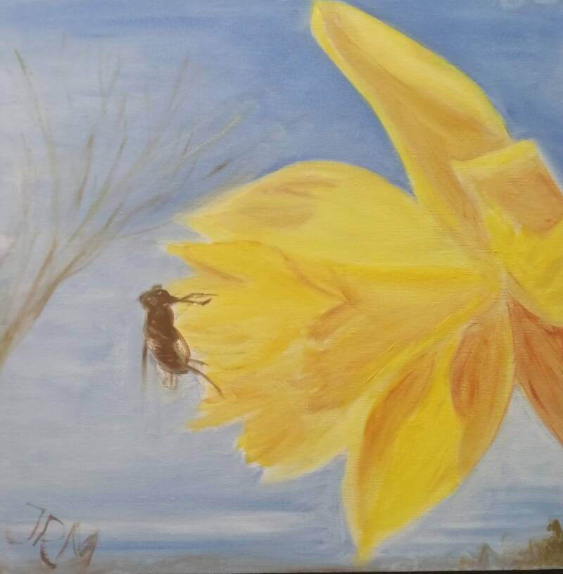 Narcis met Insekt / Daffodil with Insect