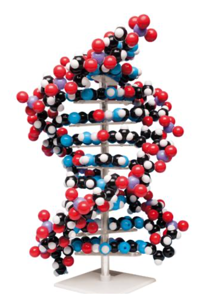 10-laags DNA model