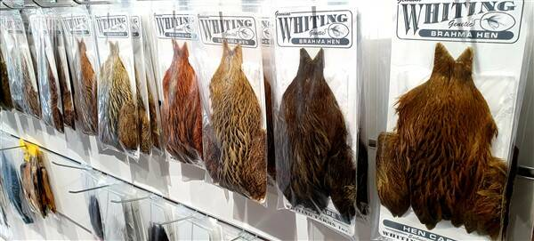 Whiting Brahma Hen 11 colours