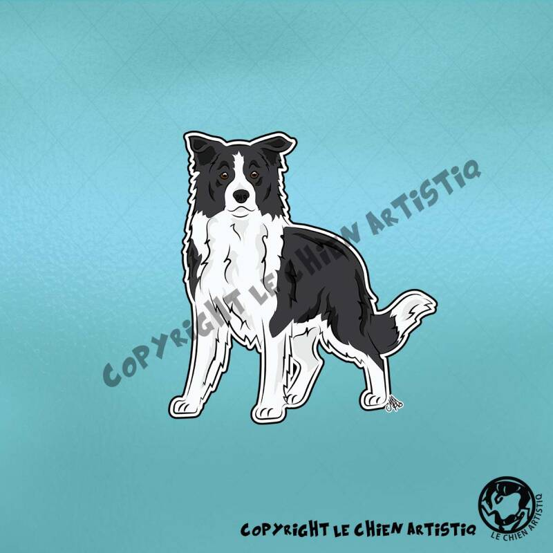 Border Collie langharig ! COMIC sticker ! 3 kleurslagen !