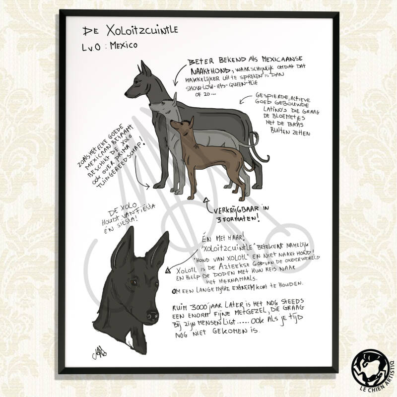 "Xoloitzcuintle / Mexicaanse Naakthond print ""Different View"""