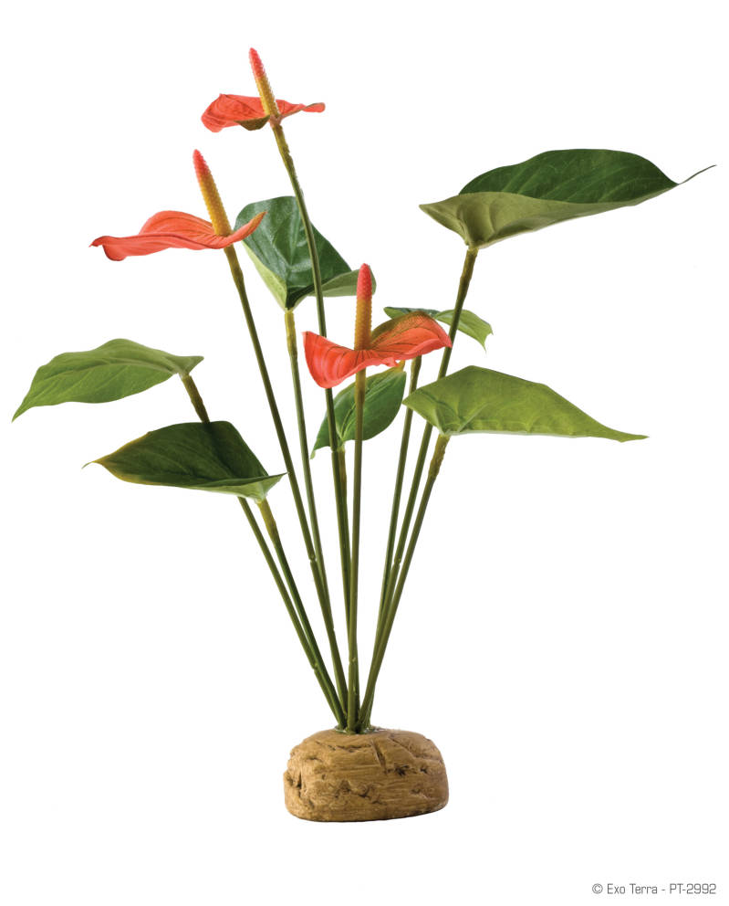 Exo Terra Anthurium Bush PT2992