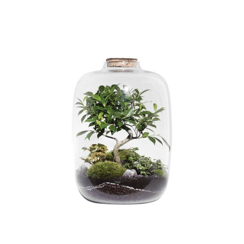 Terrarium FOREST XL