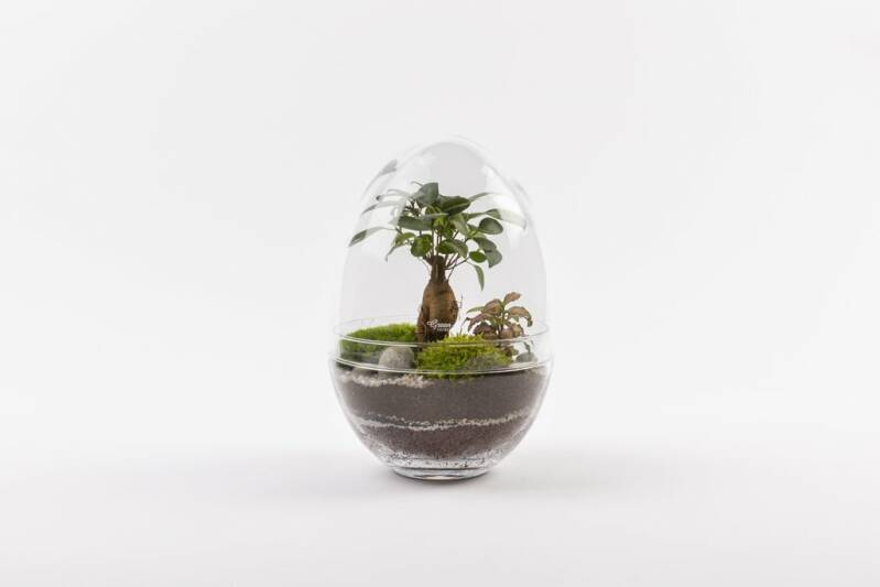 Terrarium plants EGG