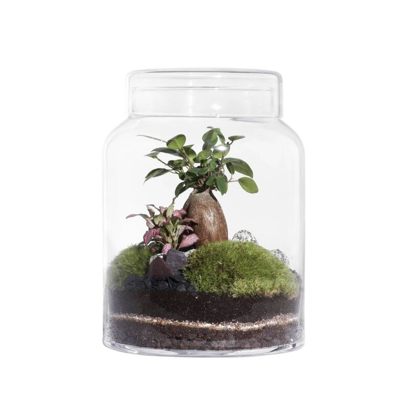 Terrarium FLAT MEDIUM
