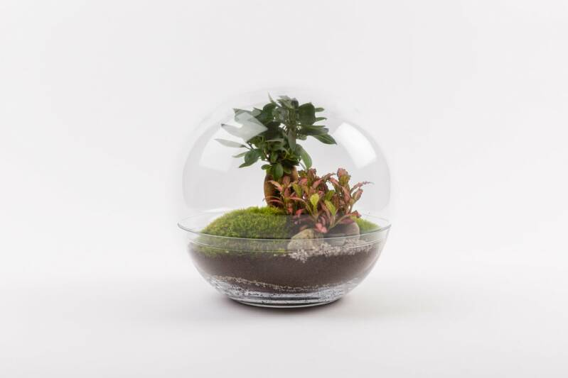 Terrarium plants FOREST MOON