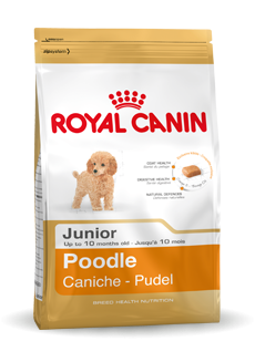 Royal Canin Poedel Adult