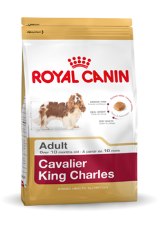 Royal Canin Cavalier King Charles Ault