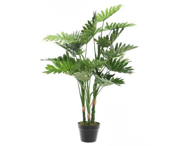 plc philodendron in pot green