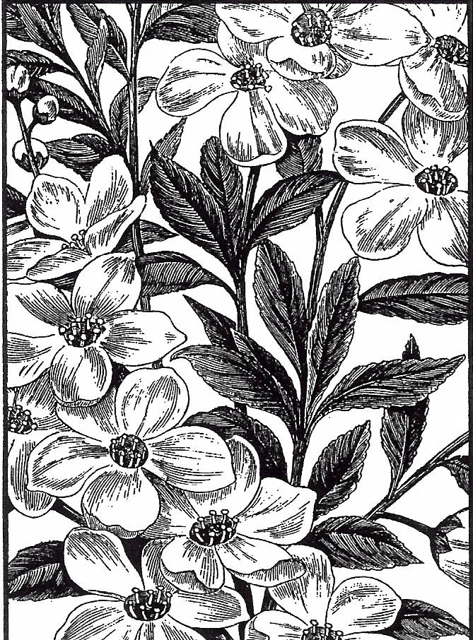 EI P1526/25 Dogwood rectangle