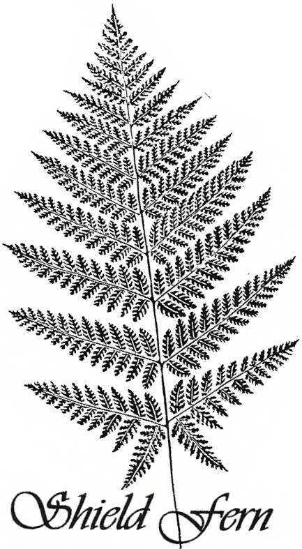 EI P1795/41 Shield fern