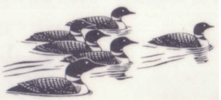 261C Loons in water
