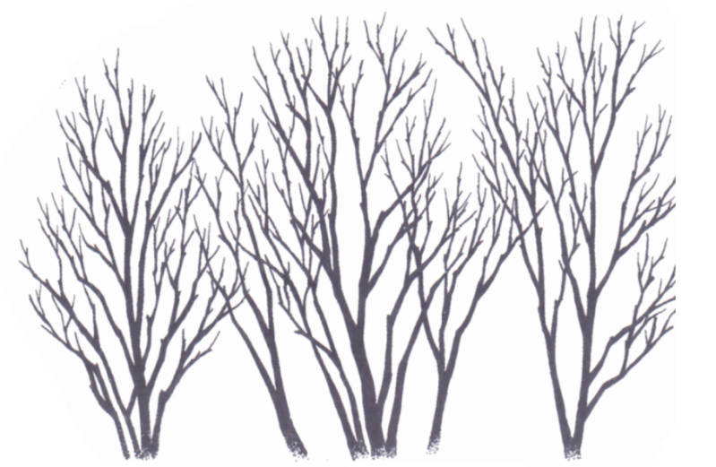 269G Three bare trees