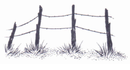 293C Old fence