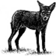 402A Coyote