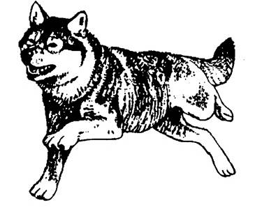 SW D05062/SWCP05 Wolf 1
