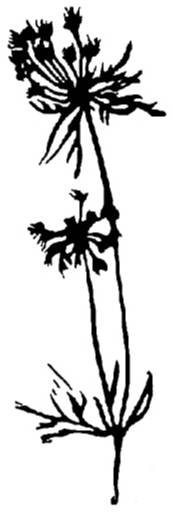 NS F5709 Flower silhouette 2