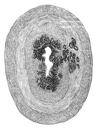 FAS G3107 Background oval