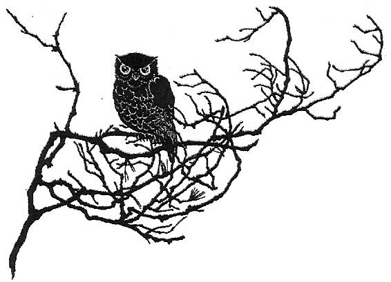 CP Q538/47 Owl on branch