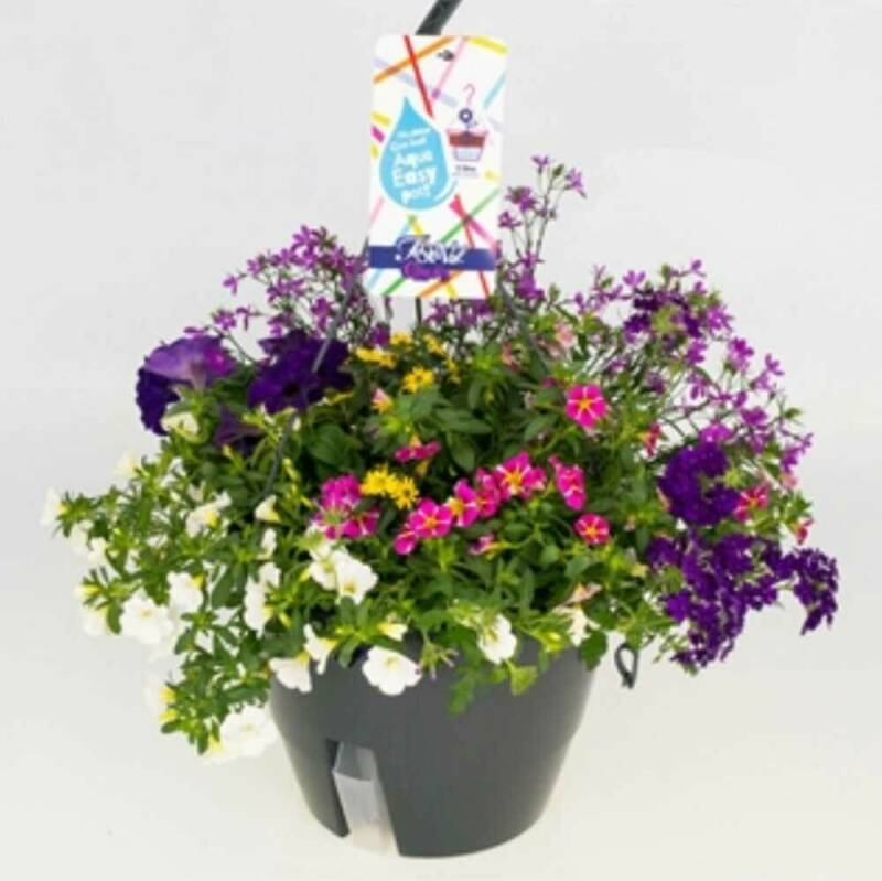 Festival | mix hangplant in pot met waterreservoir