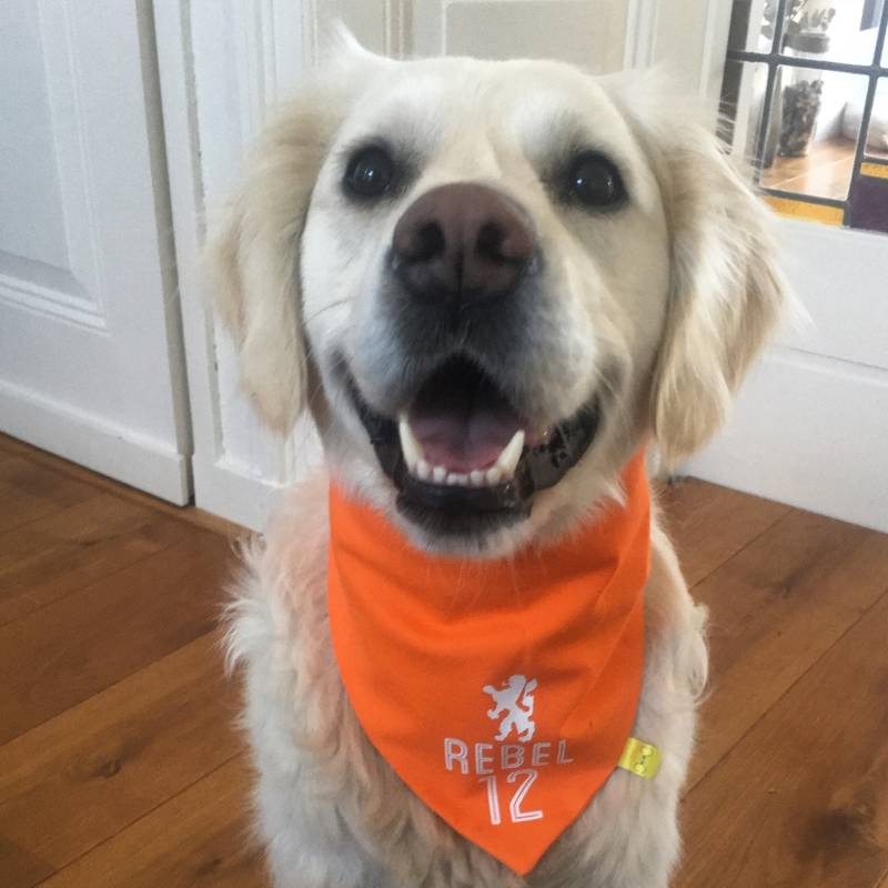 Dutch supporter bandana