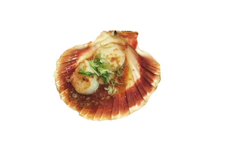 105a. Coquilles