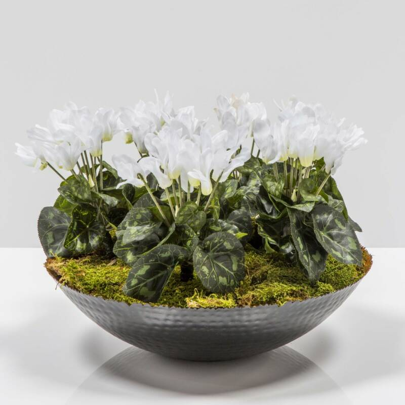 Black bowl with cyclamen
