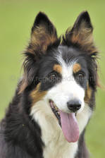 scotland_sheepdogtrials_0640.jpg
