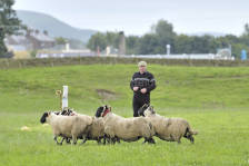 scotland_sheepdogtrials_0647.jpg