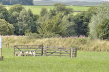 scotland_sheepdogtrials_0661.jpg