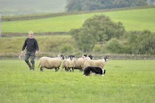 scotland_sheepdogtrials_0667.jpg
