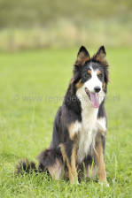 scotland_sheepdogtrials_0678.jpg