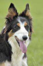 scotland_sheepdogtrials_0682.jpg