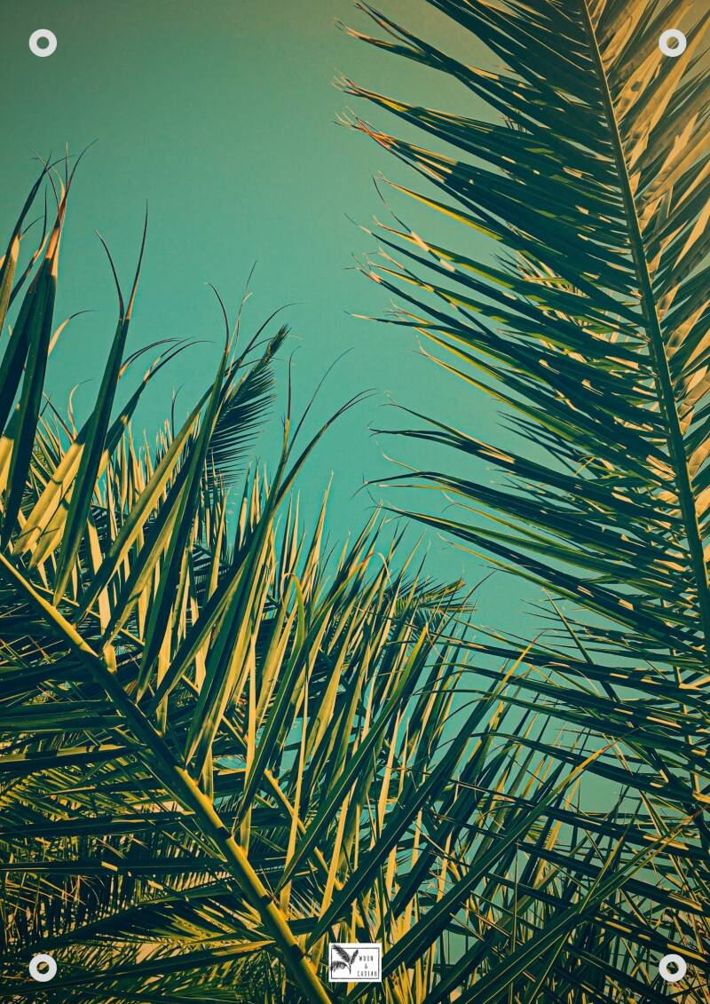 Tuinposter Palmblad | Made Paper