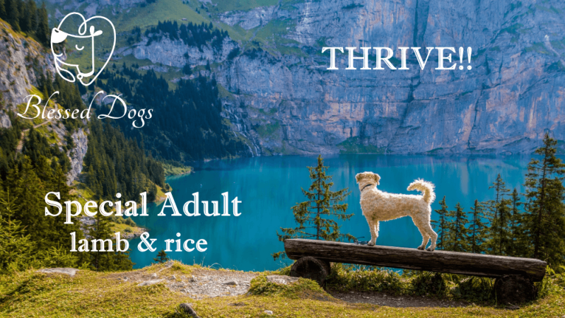 Thrive!! 20kg Special Adult lamb & rice