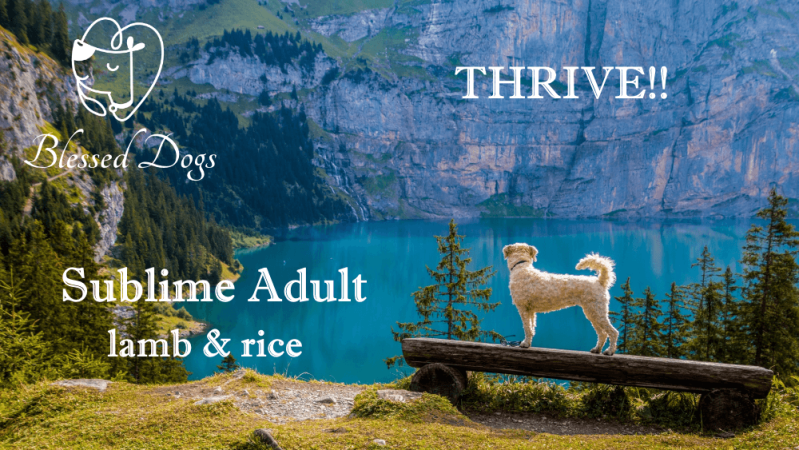 Thrive!! 4 kg Sublime Adult lamb & rice