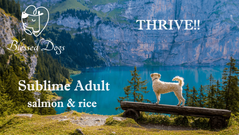 Thrive!! 20kg Sublime Adult salmon & rice